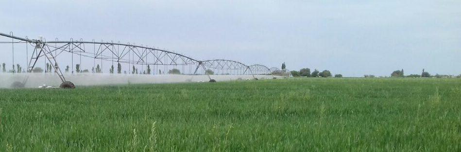 campo de trigo.jpg